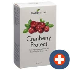 Phytopharma cranberry protect cape 60 pcs